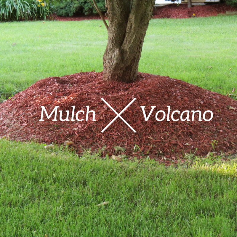 SAY NO! TO MULCH VOLCANOES (4)